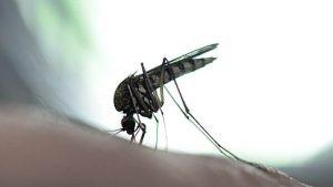 No existe una vacuna para prevenir el dengue. Los investigadores están trabajando en vacunas contra dicha enfermedad, pero aún no se tienen resultados concretos.