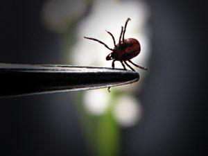 El principal tratamiento para hacer frente a la enfermedad de Lyme está basado en antibióticos.