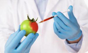 Los alimentos transgénicos son aquellos que contienen o están compuestos por organismos modificados genéticamente (OMG) o han sido producidos a partir de ellos.