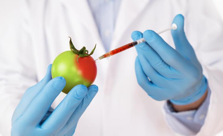 La Salud y los Alimentos Transgénicos